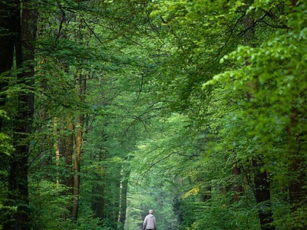 Wandeltocht vrijdag 9 augustus
