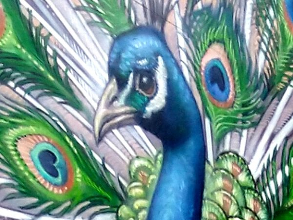 Nieuw pauw-schilderij